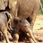 TRAVEL / Zuid-Afrika: Addo Elephant Park