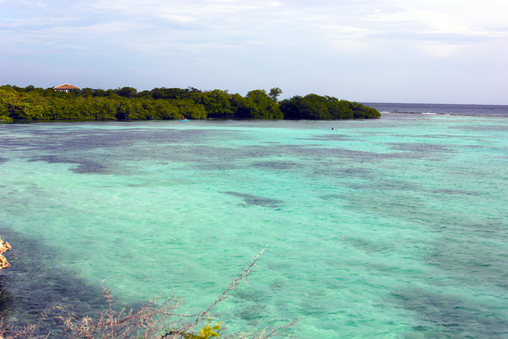 Mangrove Aruba