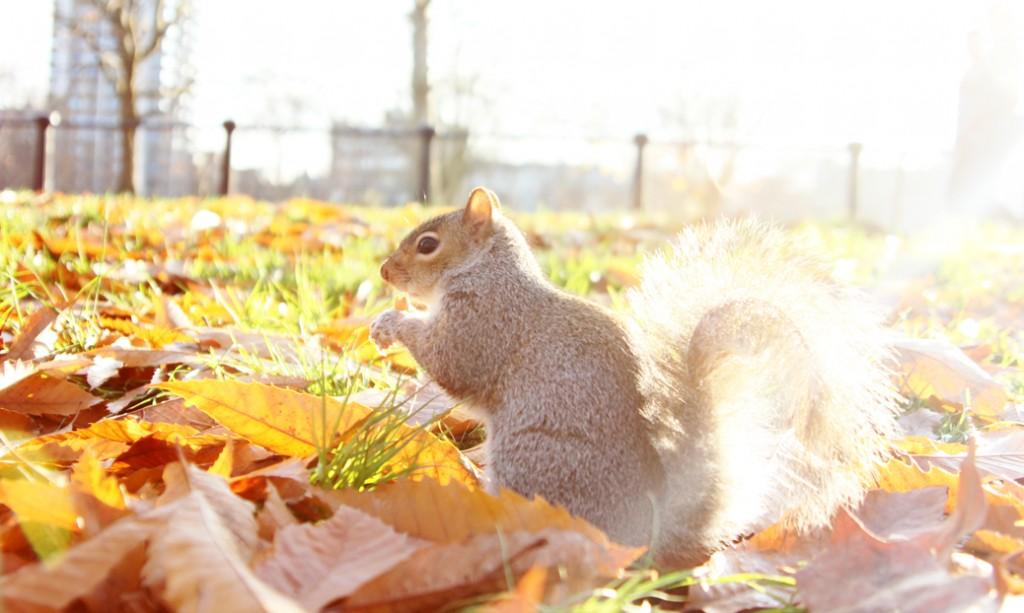 Squirrel London