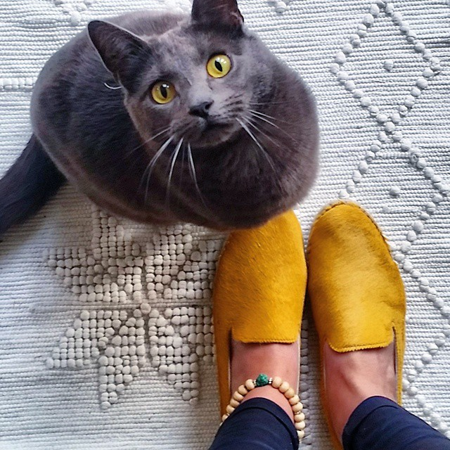 Very happy with my new hairy espadrilles from @omodashoes! Aap loves them too, they are as soft as he is ánd they match his eyes. ?