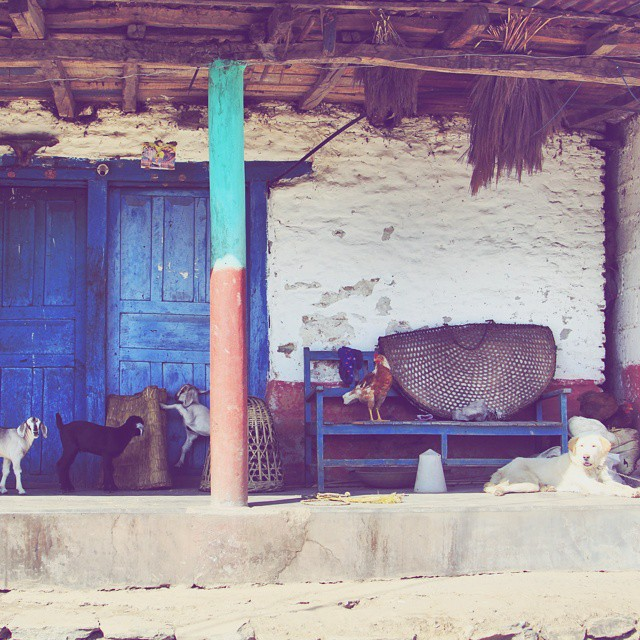 A blue door, one dog, two chickens and three goats. My kind of place. #❤ #streetlife