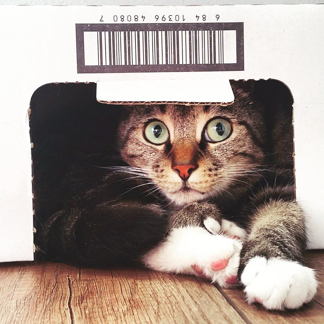 Cats and boxes... ❤ #Noot #catspam