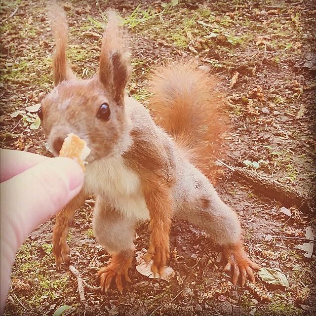 Well hello there handsome! #Leipzig #squirrel #herewegoagain