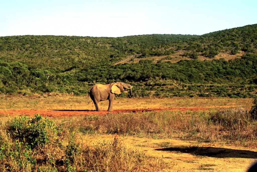 Addo road trip Zuid-Afrika