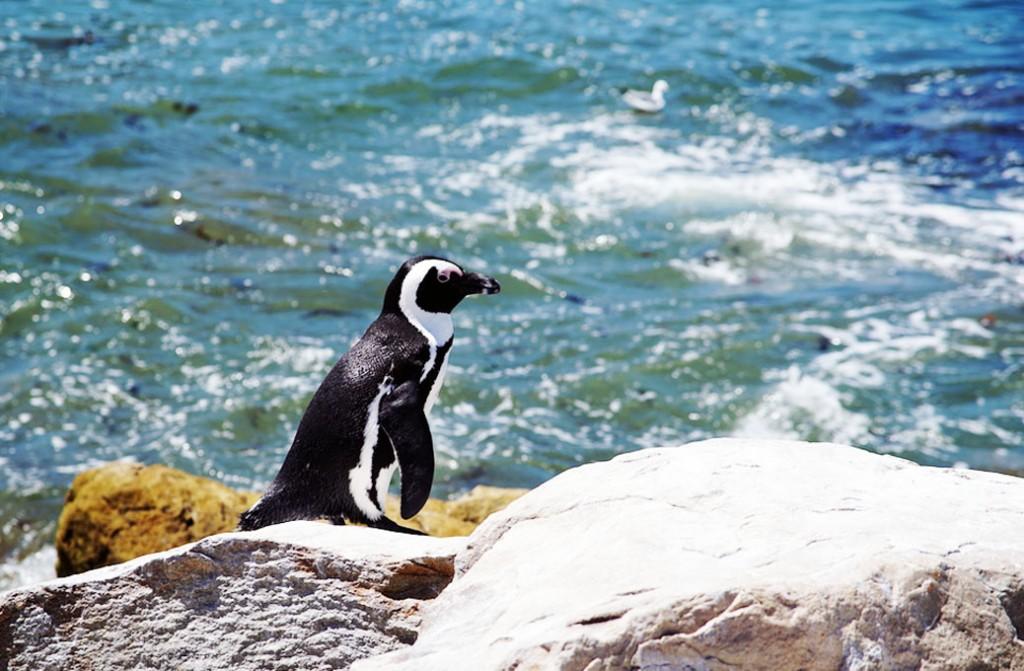 Cape Whale Coast Route
