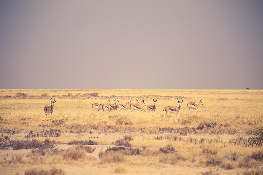 Namibie-15