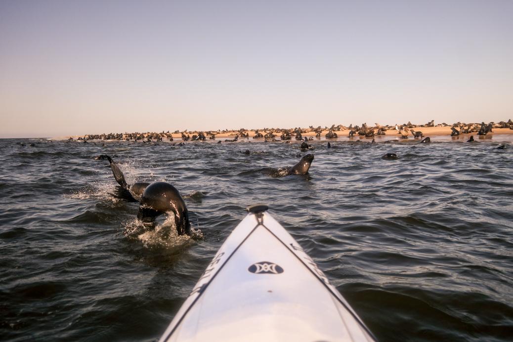 pelicanpiint