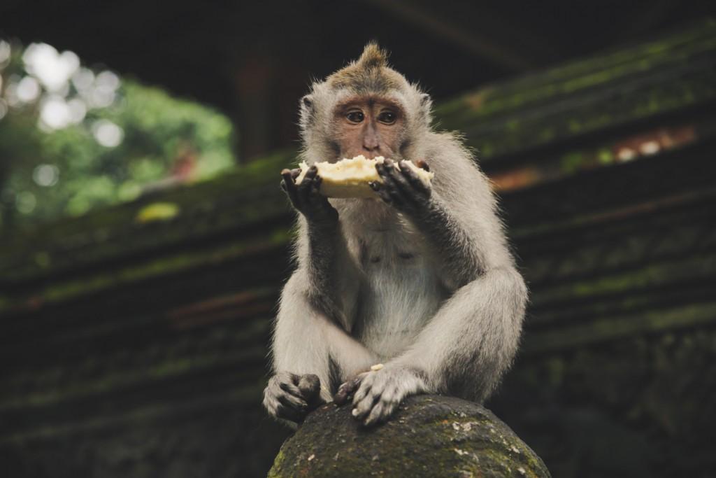 Bali_Hotspots-8