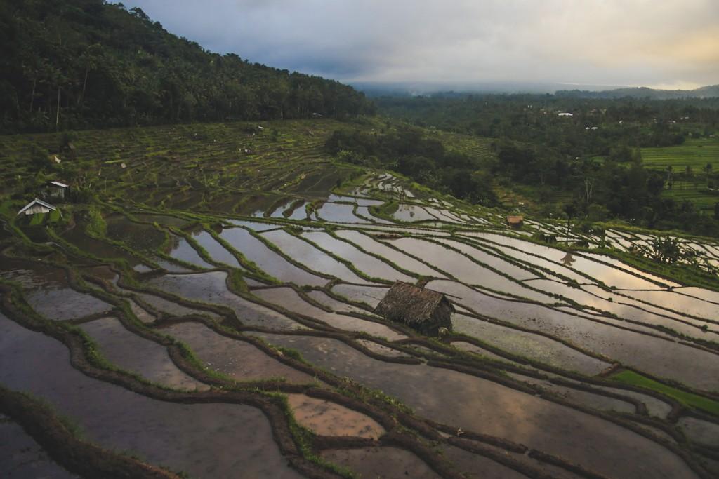 Bali_Papa-39