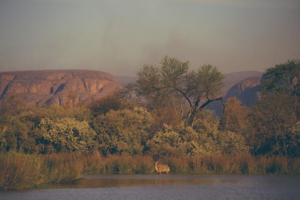 Zuid-Afrika-Limpopo-Kruger-11