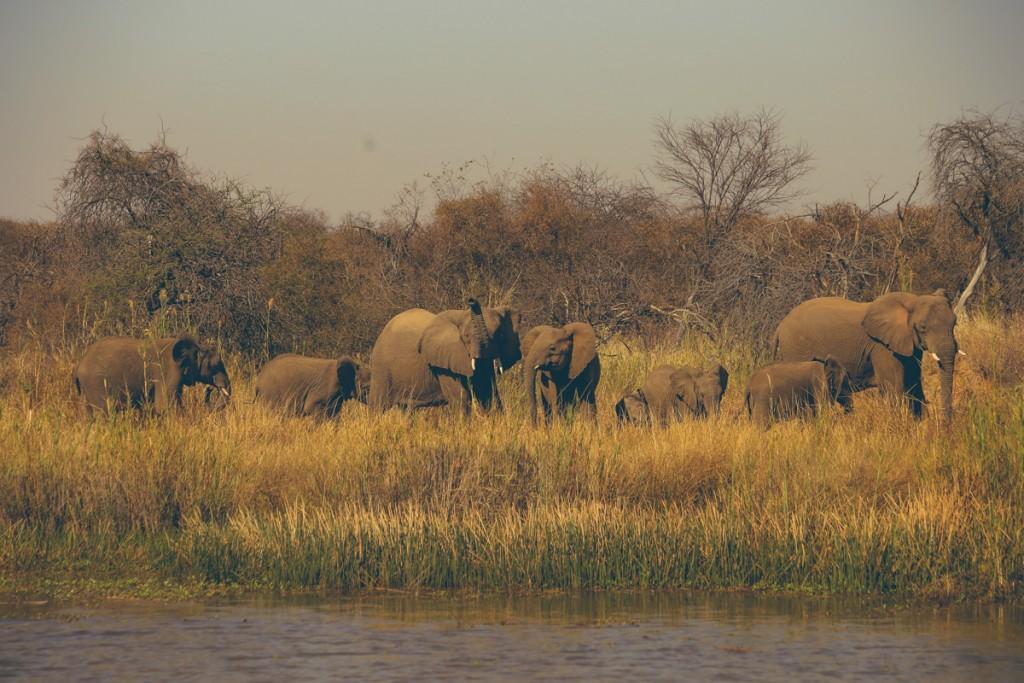 Zuid-Afrika-Limpopo-Kruger-17