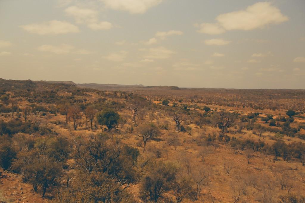 Zuid-Afrika-Limpopo-Kruger-1