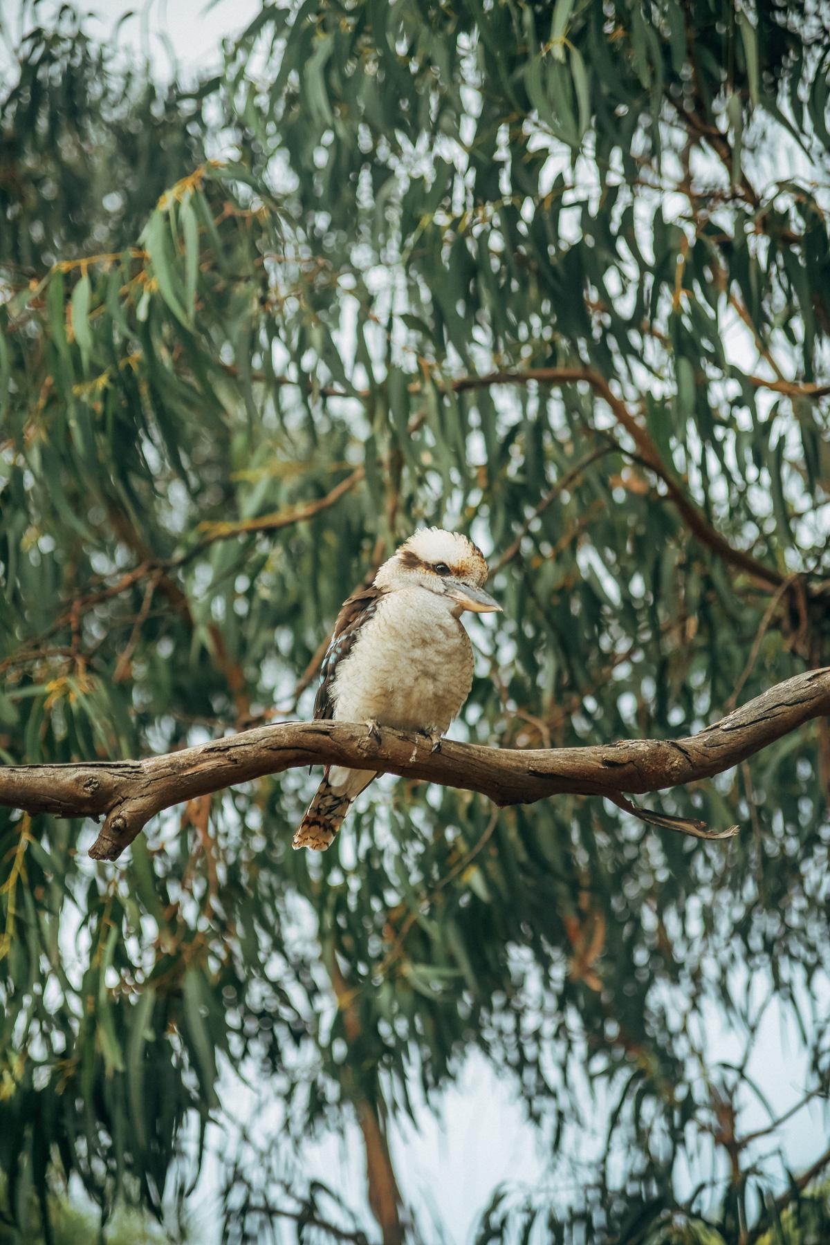 Australië_GreatOceanRoad_Hoogtepunten-36
