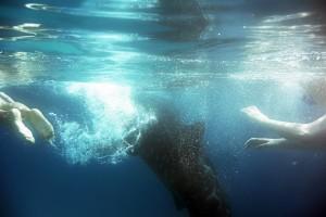 Oslob Whalesharks