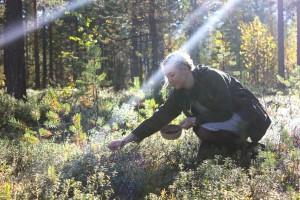 Fins Lapland bessen