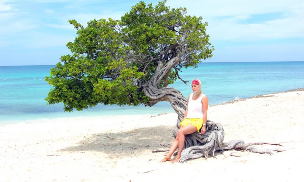 Divi Divi Aruba