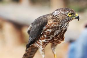 vogel gambia