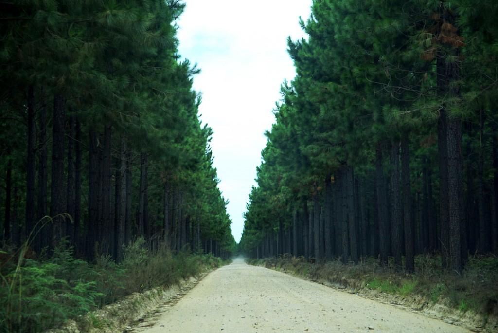 Tsitsikamma route