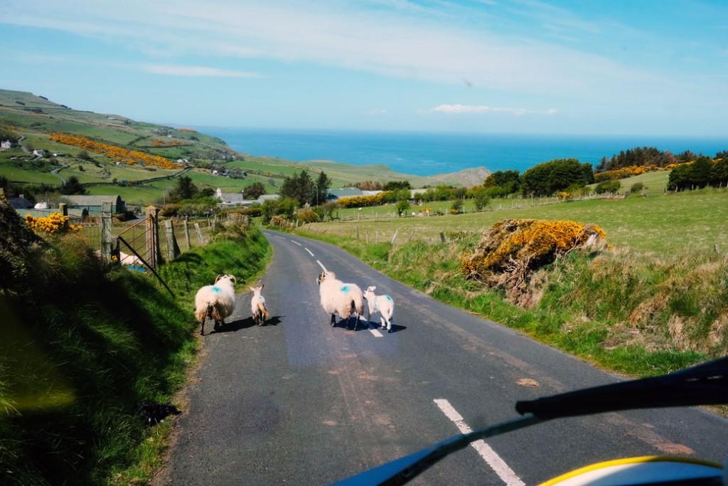 Noord-Ierland