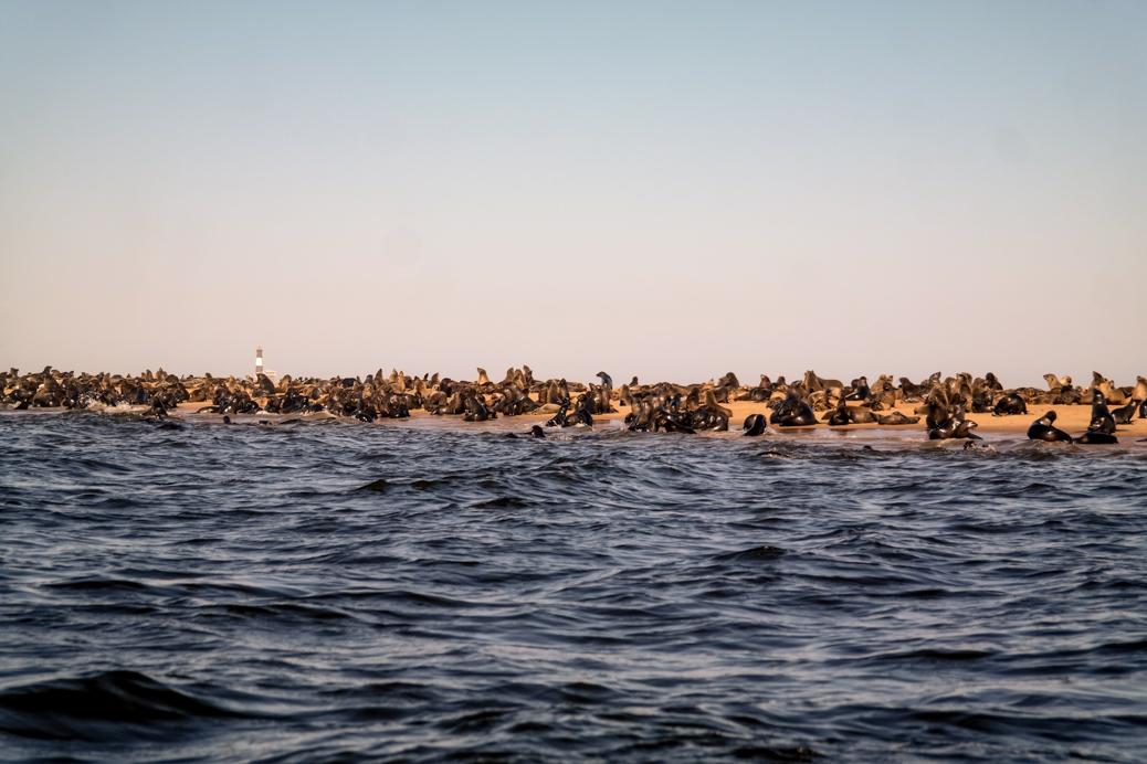 pelicanpoint