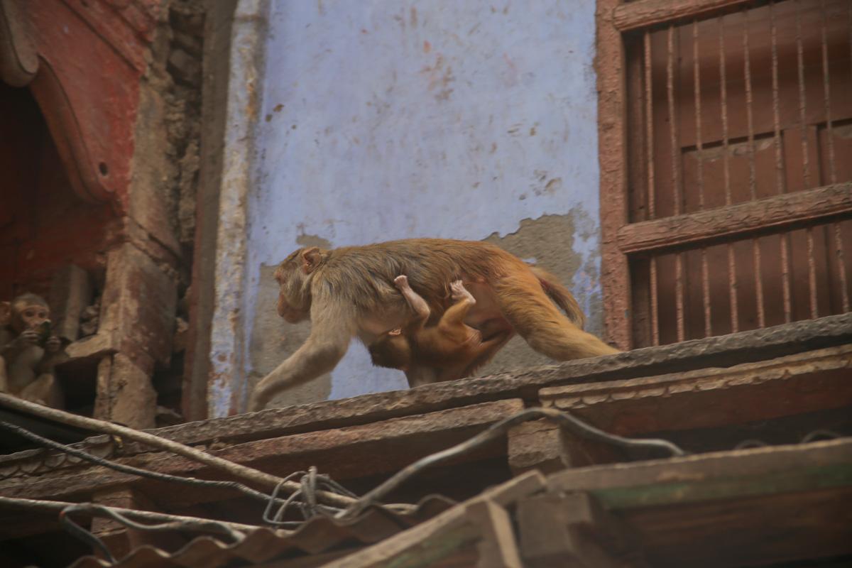 NEPAL_INDIA-117