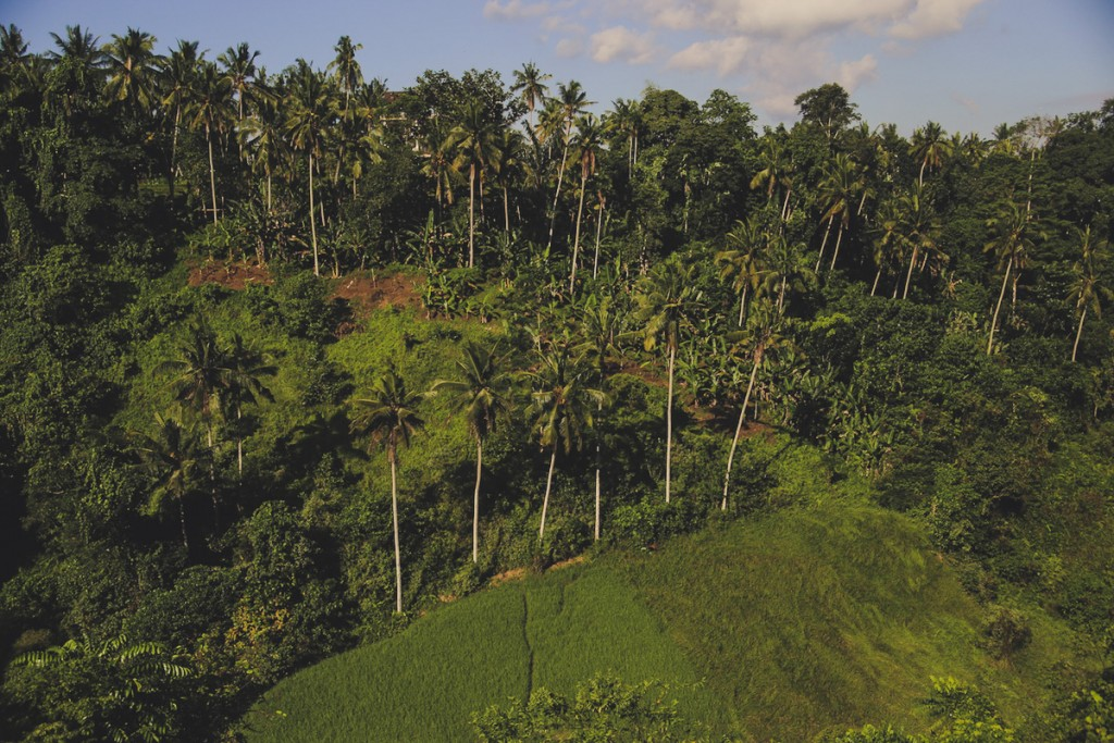 Bali_Papa-1