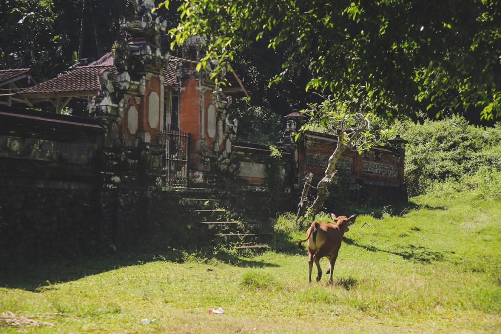 Bali_Papa-27