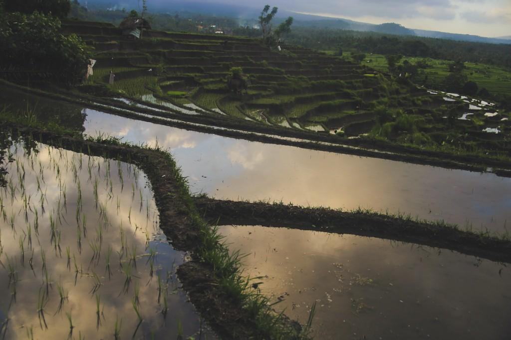 Bali_Papa-36
