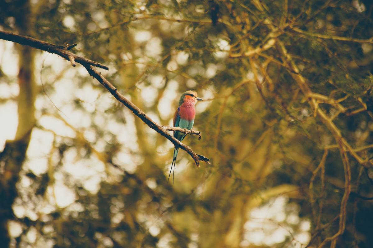 Zuid-Afrika-Limpopo-Kruger-26