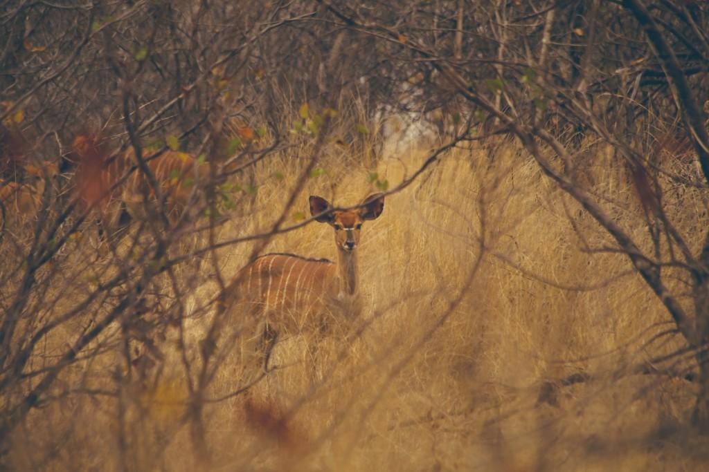 Zuid-Afrika-Limpopo-Kruger-29