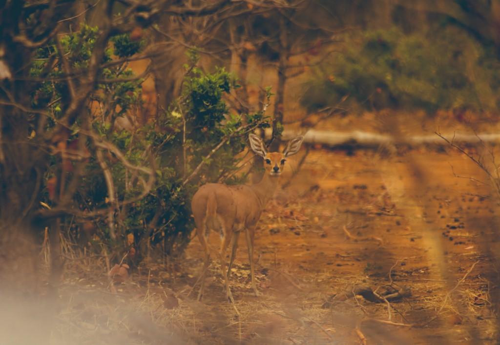 Zuid-Afrika-Limpopo-Kruger-30