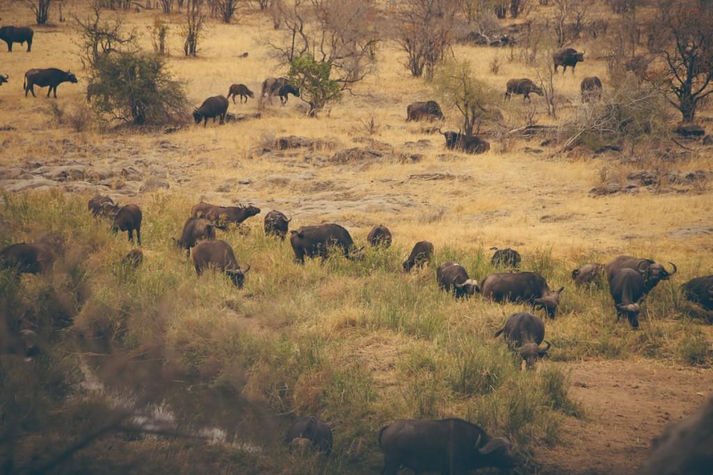 Zuid-Afrika-Limpopo-Kruger-31