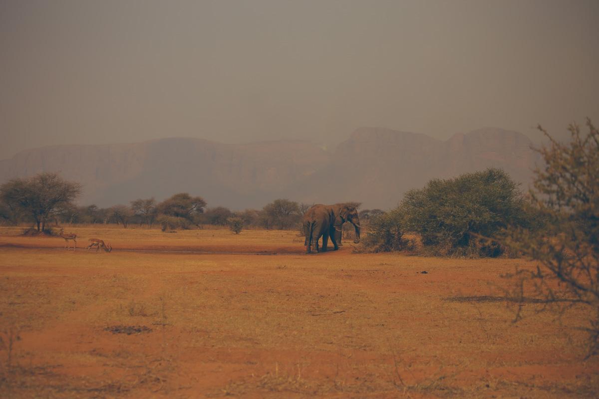 Zuid-Afrika-Limpopo-Kruger-5