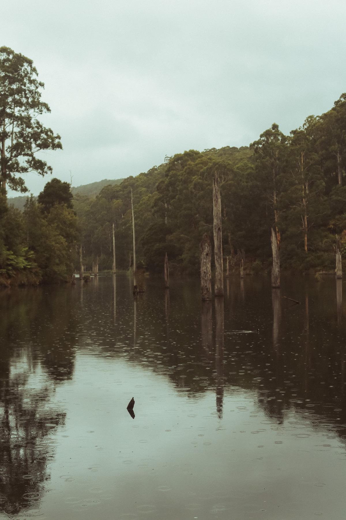 Australië_GreatOceanRoad_Hoogtepunten-26