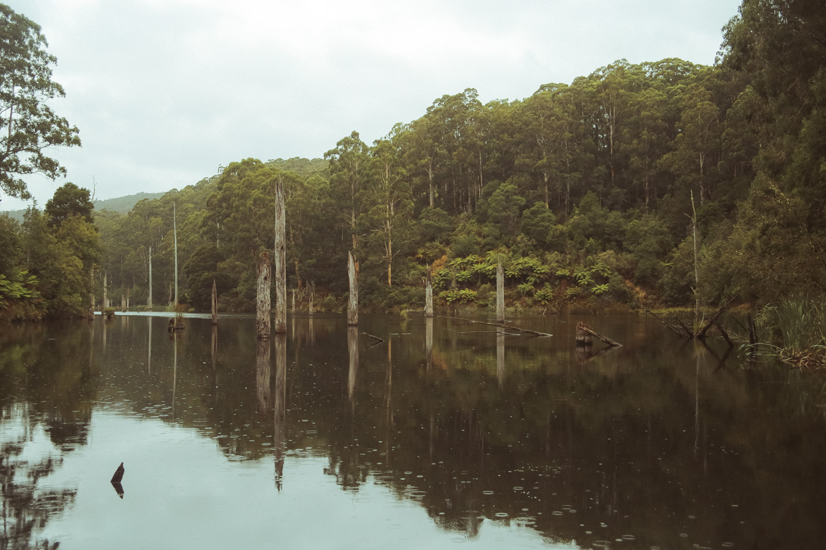 Australië_GreatOceanRoad_Hoogtepunten-29