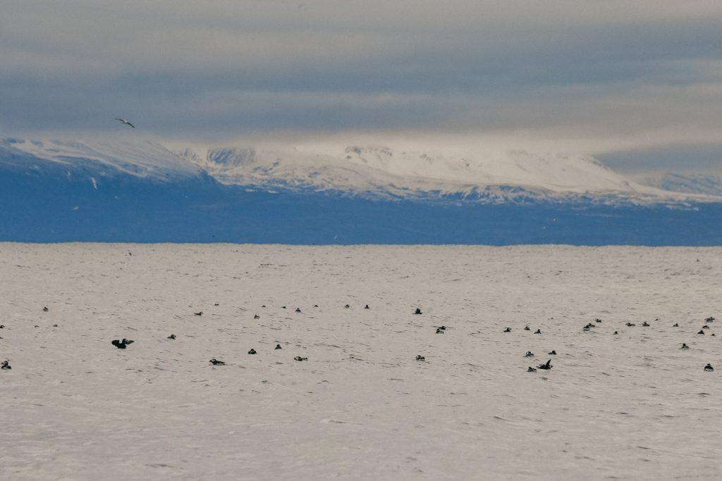 Walvissen IJsland Noord-IJsland