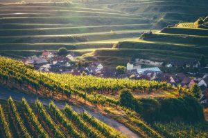 Baden Wineroute