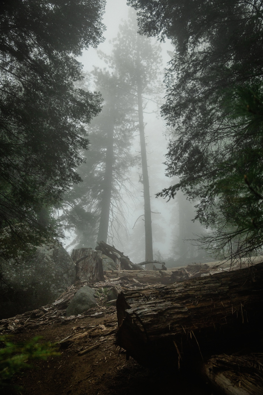 zwarte woud duitsland